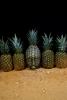 ananas-5