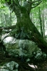 12_johannes-stoetter_rock-tree_10_1