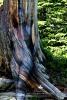 Weathered Swiss Pine