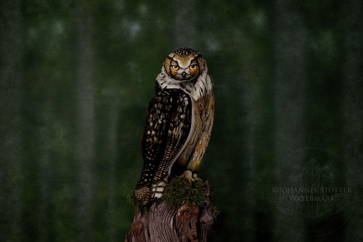 Owl Bodypainting Illusion